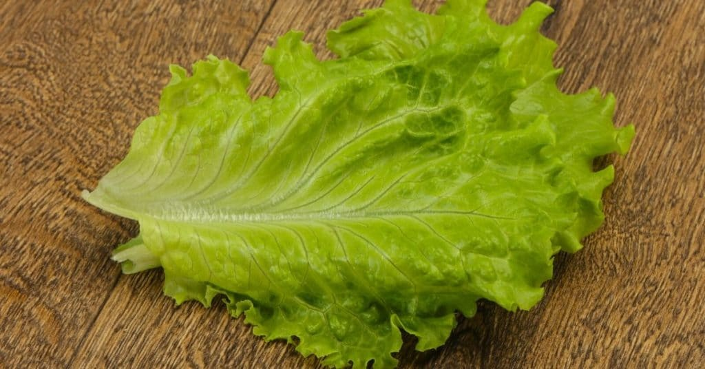 freeze lettuce