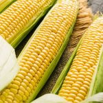 How To Reheat Corn On The Cob For A Sweet Juicy Flavor