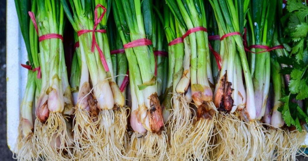 freeze green onions