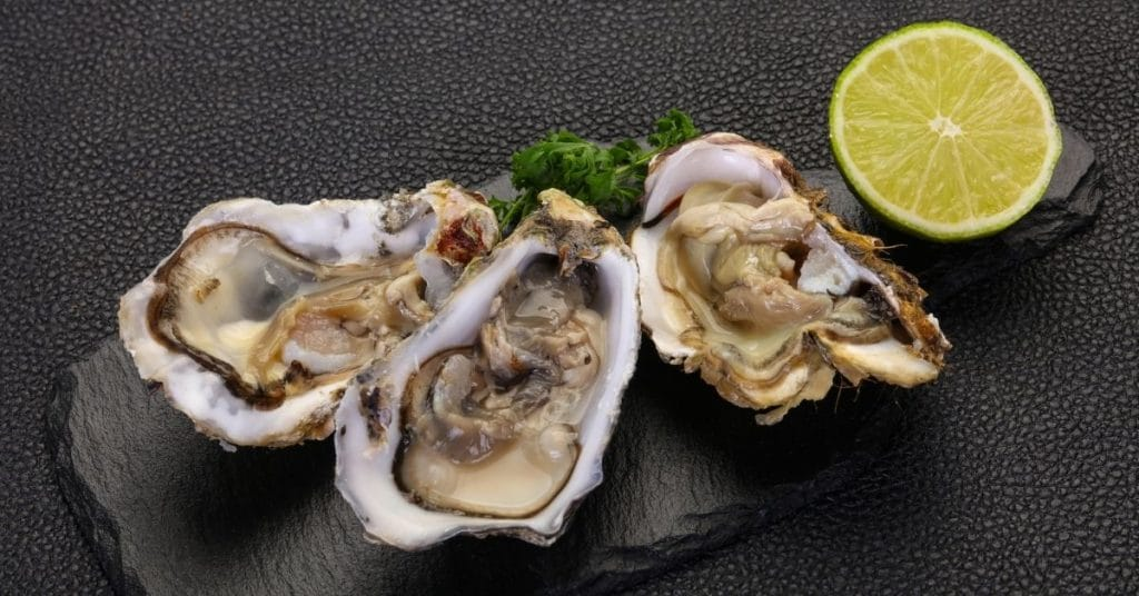 freeze oysters