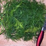 How To Dry Fresh Dill Successfully